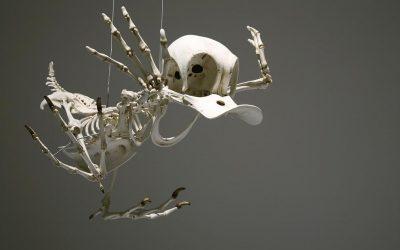 Hur ser Kalle Ankas skelett ut?