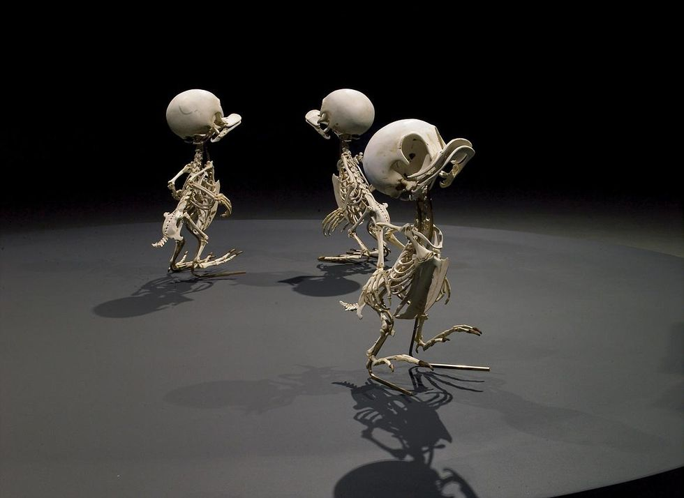 Knattarnas skelett